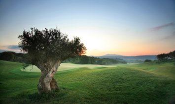 Golf Front I