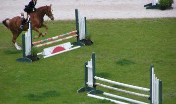 Equestrian Masterpiece
