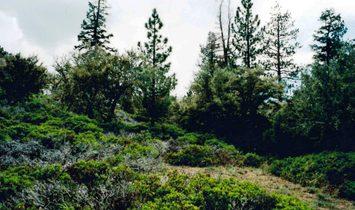 Terreno en Big Bear Lake, California, Estados Unidos 1