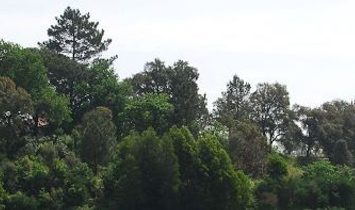 Allotment  for sell in Braga