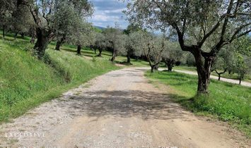 Farm in Pistoia