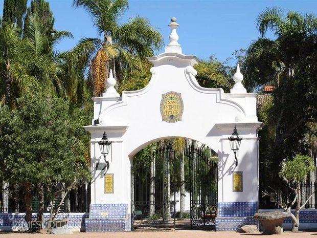 San Pedro de Timote (The Grandfather of the Uruguayan Tur... (10577050)