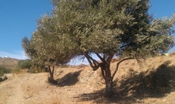 Land in city Kiklady