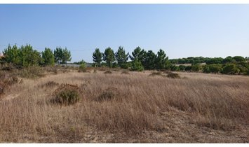 Mixed land in Melides, VALE FIGUEIRA