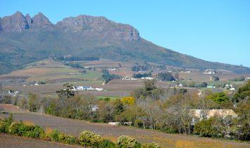 Estate in Stellenbosch, Western Cape, South Africa 1