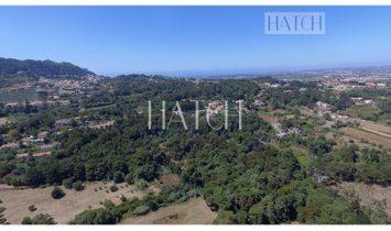 Beautiful 2.5 Hectare Estate in Sintra
