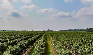 WINERY FARM