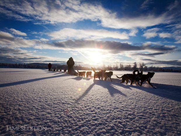 Amazing Dogsledding adventures in Lapland/Sweden (513412)
