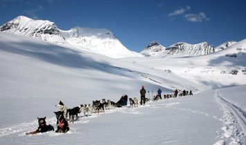 Amazing Dogsledding adventures in Lapland/Sweden