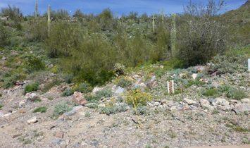 11137 E Canyon Cross Way