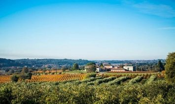 Wine Domaine With Organice Vineyard, Recent House Of 650 m2, House To Renovate, Modern Cellar.