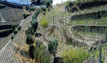Santa Marta de Penaguiao farm