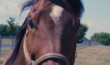 Sale - Equestrian estate New York