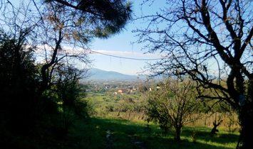 Farmstead / Courtyard for sale in Capannori