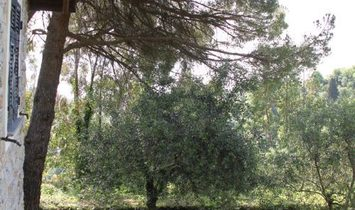 SANTA MARGHERITA HILL (SAN LORENZO) old style villa wrapped in beautiful gardens