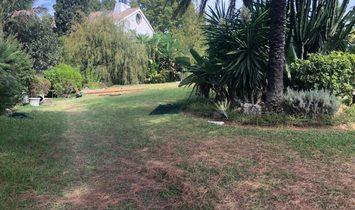 Marbella Plot