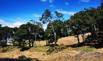 19201 - Farm for high end development between Santa Ana and Escazu