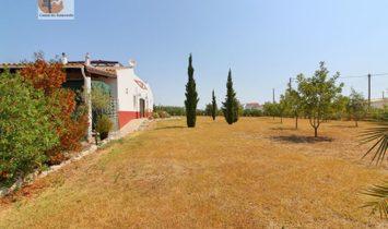 Small Farm in Luz de Tavira