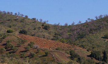 Land in Velez-Malaga, Andalusia, Spain