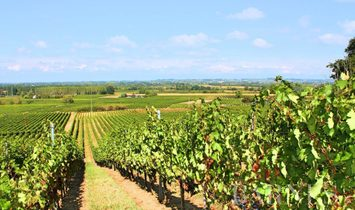 Sale - Vineyard property Bordeaux
