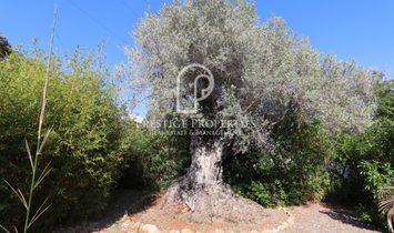 Santa Gertrudis De Fruitera Villa