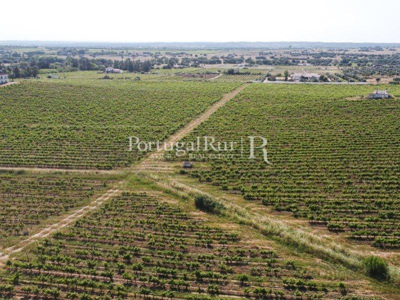 Farm Ranch in Évora, Portugal 1