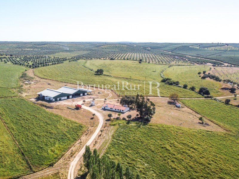 Farm Ranch in Avis, Portalegre District, Portugal 1