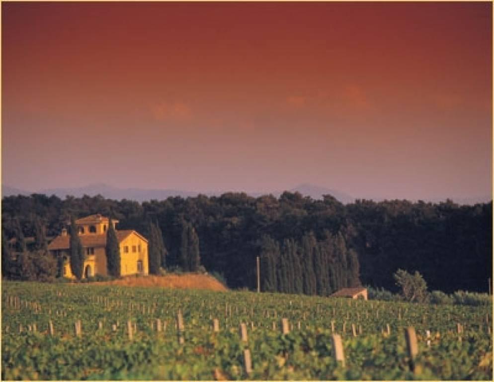 Villa in Bolgheri, Tuscany, Italy 1 - 10755581
