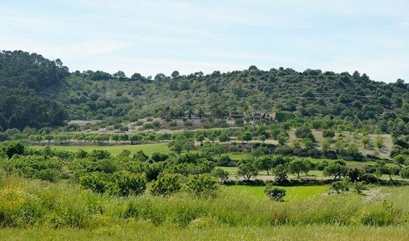 Land in Lloret de Vistalegre, Balearic Islands, Spain 1