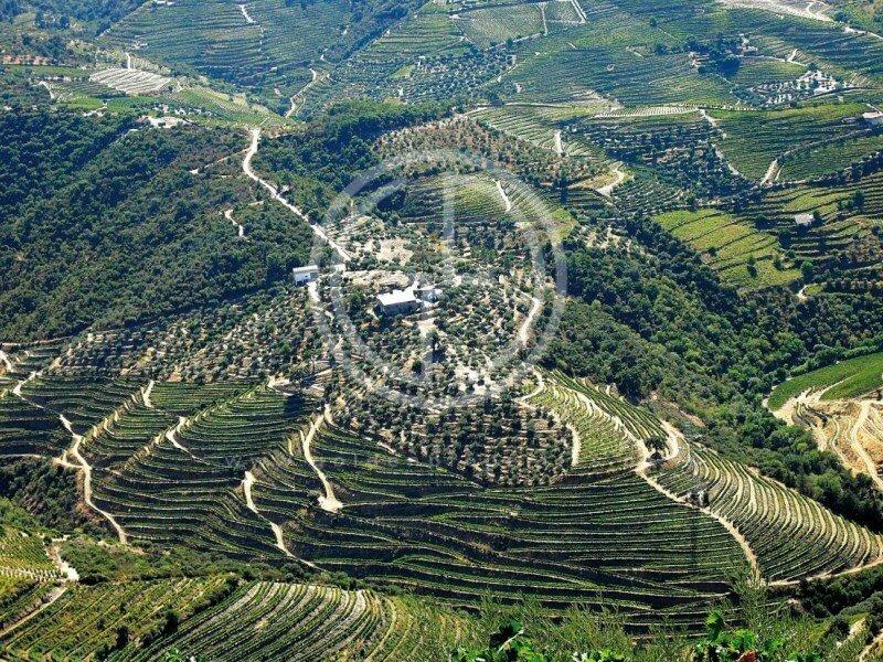 Farm Ranch in Castanheiro do Sul, Viseu District, Portugal 1
