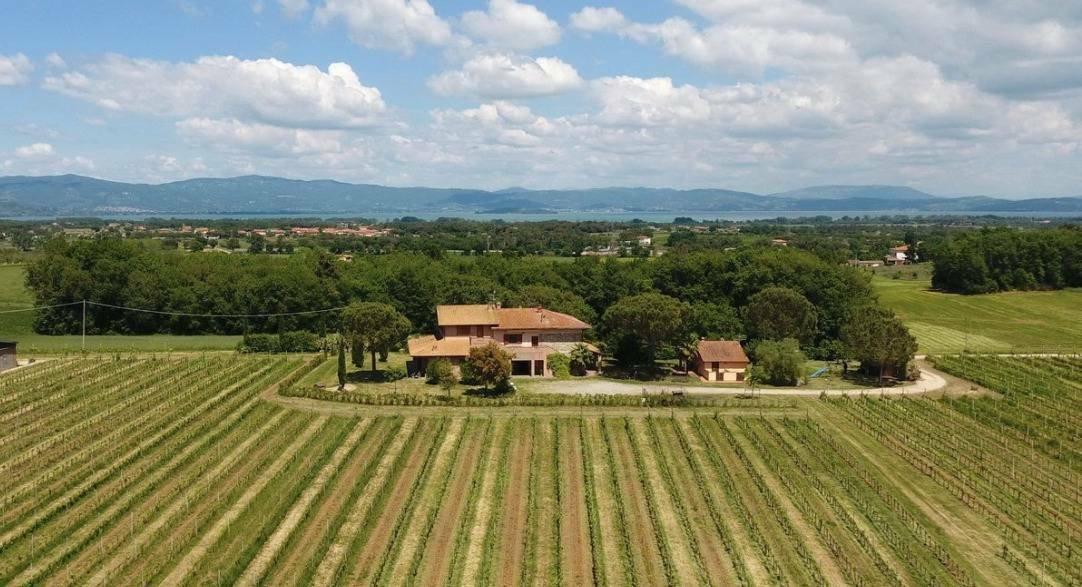 Farm Ranch in Castiglione del Lago, Umbria, Italy 1 - 11350384