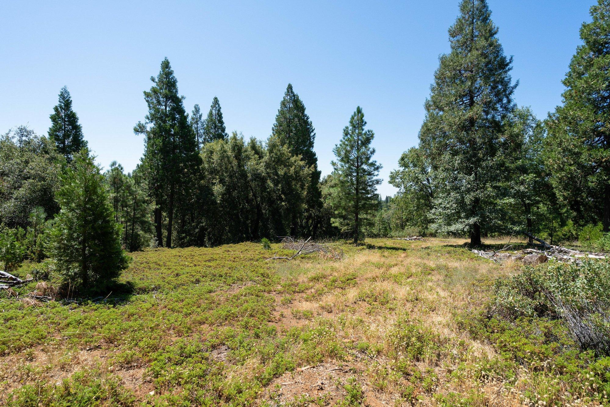 Terreno a Pioneer, California, Stati Uniti 1 - 11435401