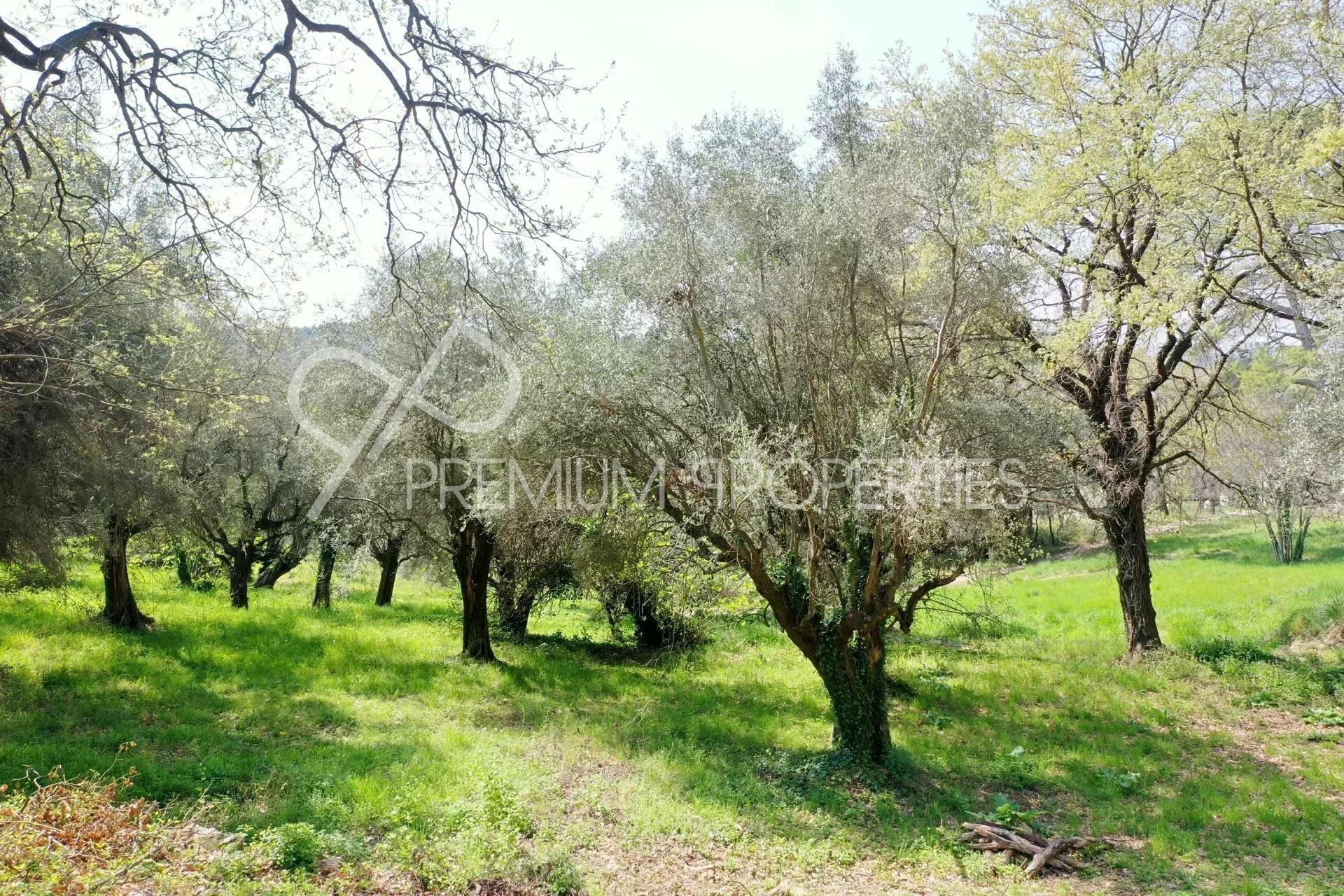 Land in Opio, Provence-Alpes-Côte d'Azur, France 1
