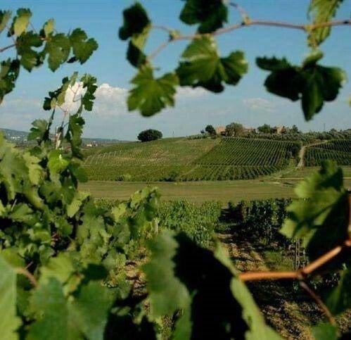 Farm Ranch in Vinci, Tuscany, Italy 1 - 11545096