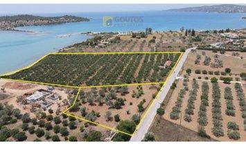Другое в Ververouda, Decentralized Administration of Peloponnese, Western Greece and the Ionian, Греция 1