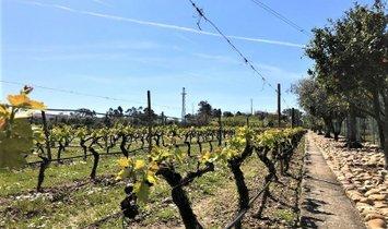 Фермерское ранчо в Pego, Сантарен, Португалия 1
